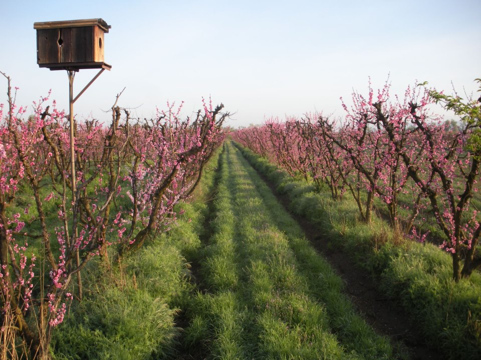 The Orchards of Blossom Bluff